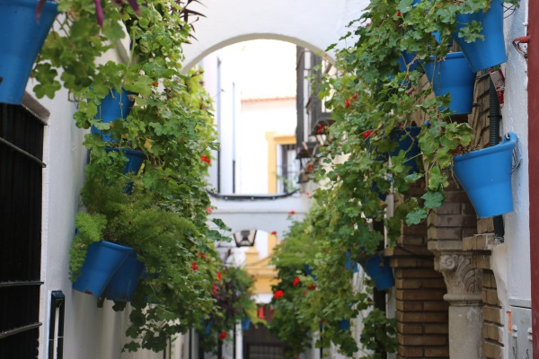 The Patios of Cordoba